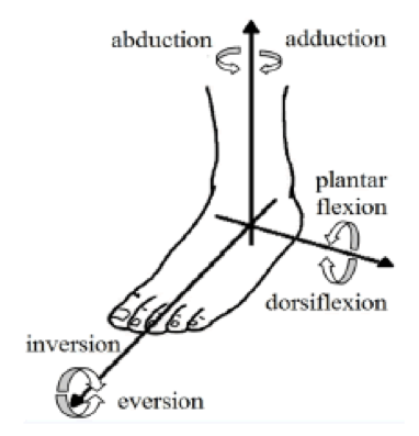 Figure 1: Motions of the Ankle